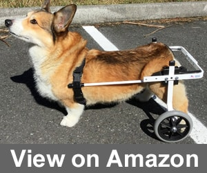 K9 Carts Rear Support Wheelchair Review
