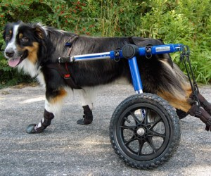 How To Make A Simple Dog Wheelchair