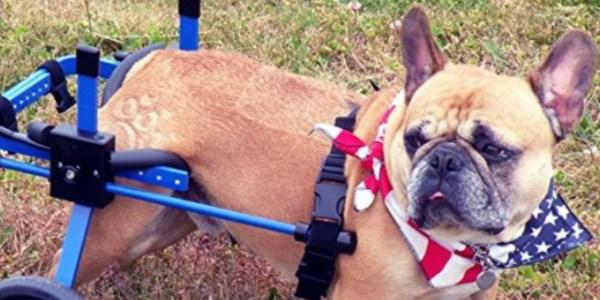 🥇10 Best Dog Wheelchair to Buy in (September 2019