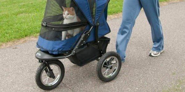 previews-best-cat-stroller Masz wózek dla kota?