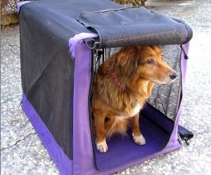 Best Dog Travel Crates Review
