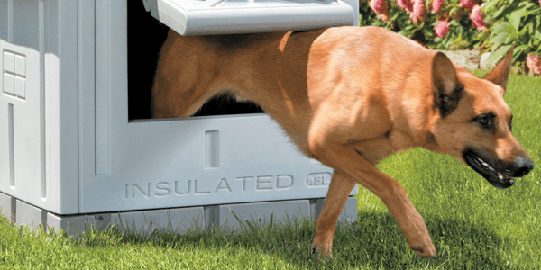 Best Dog House Buyer's Guide