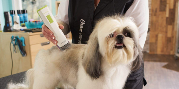 Best Dog Grooming Clipper Buyer's Guide
