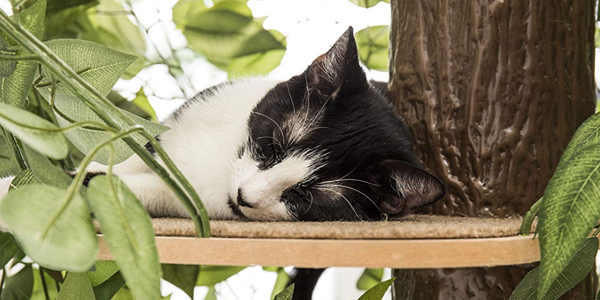 Best Cat Tree Buyer's Guide