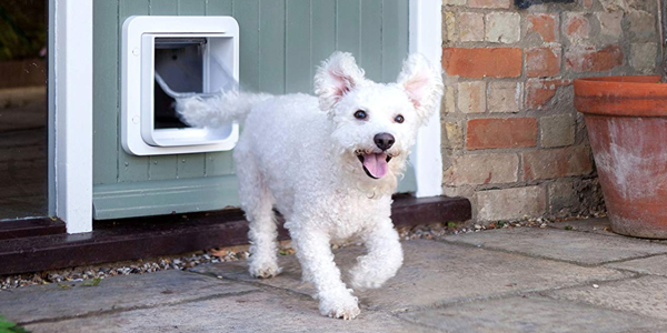 Electronic Dog Door Buyers Guide