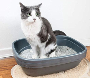 How To Train A Cat To Use A Litter Box