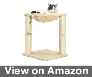 AmazonBasics Cat Scratching Post and Hammock Review