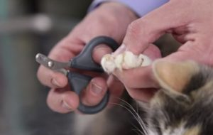 How to Trim a Cat's Nails