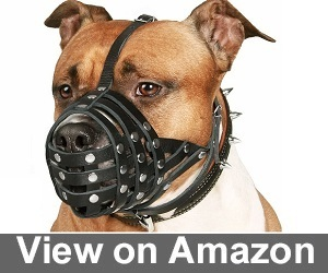 Leather Amstaff Pitbull Muzzle from CollarDirect Review