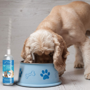 Best Water Additive for Dogs Teeth